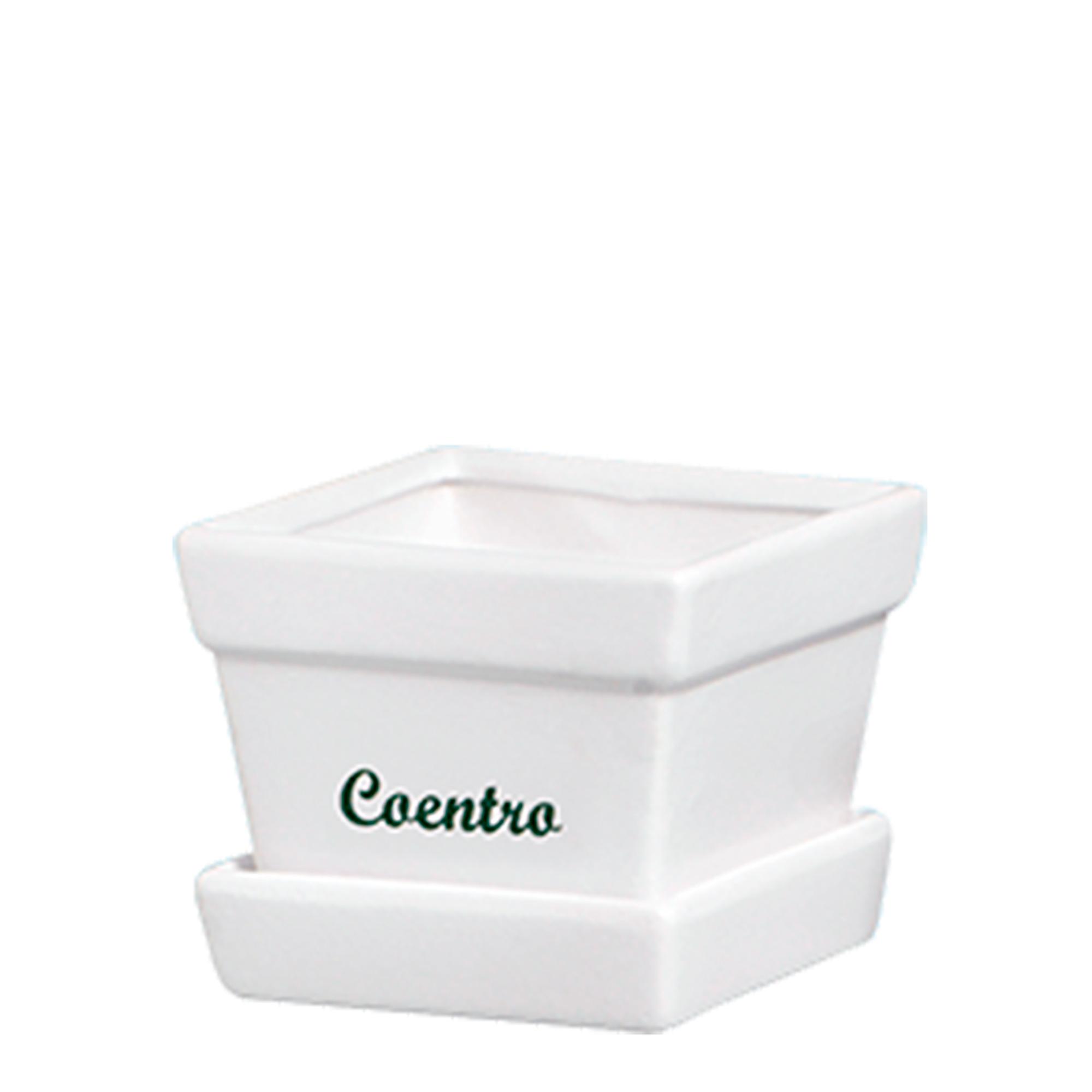 Cachepo n°1 c/ Prato Coentro